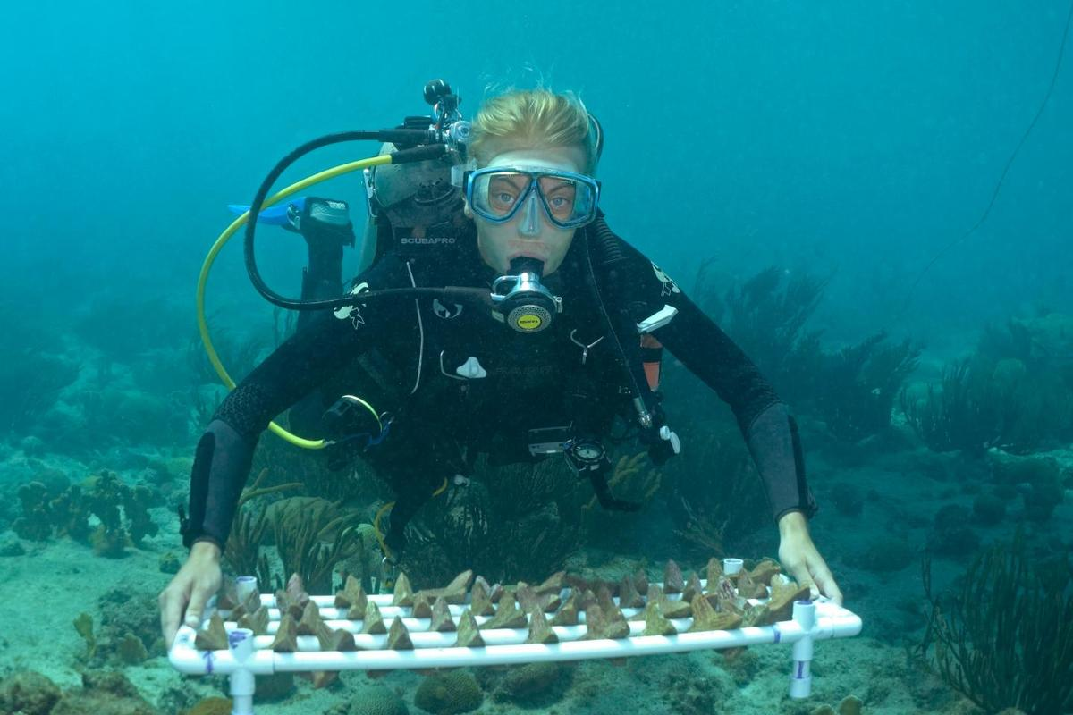 A diver with a batch of the seeding units