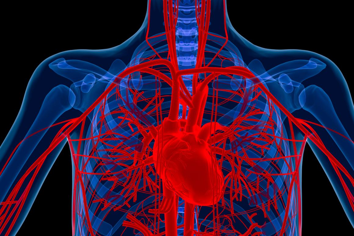 University of Texas at Austin researchers have developed a method that may speed up the body's ability to grow new blood vessels (Image: Shutterstock)
