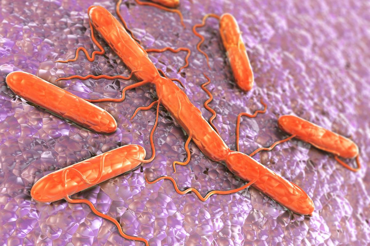 A new approach targets bad bacterai, such as Salmonella (pictured), while leaving good bacteria untouched (Image: Shutterstock)