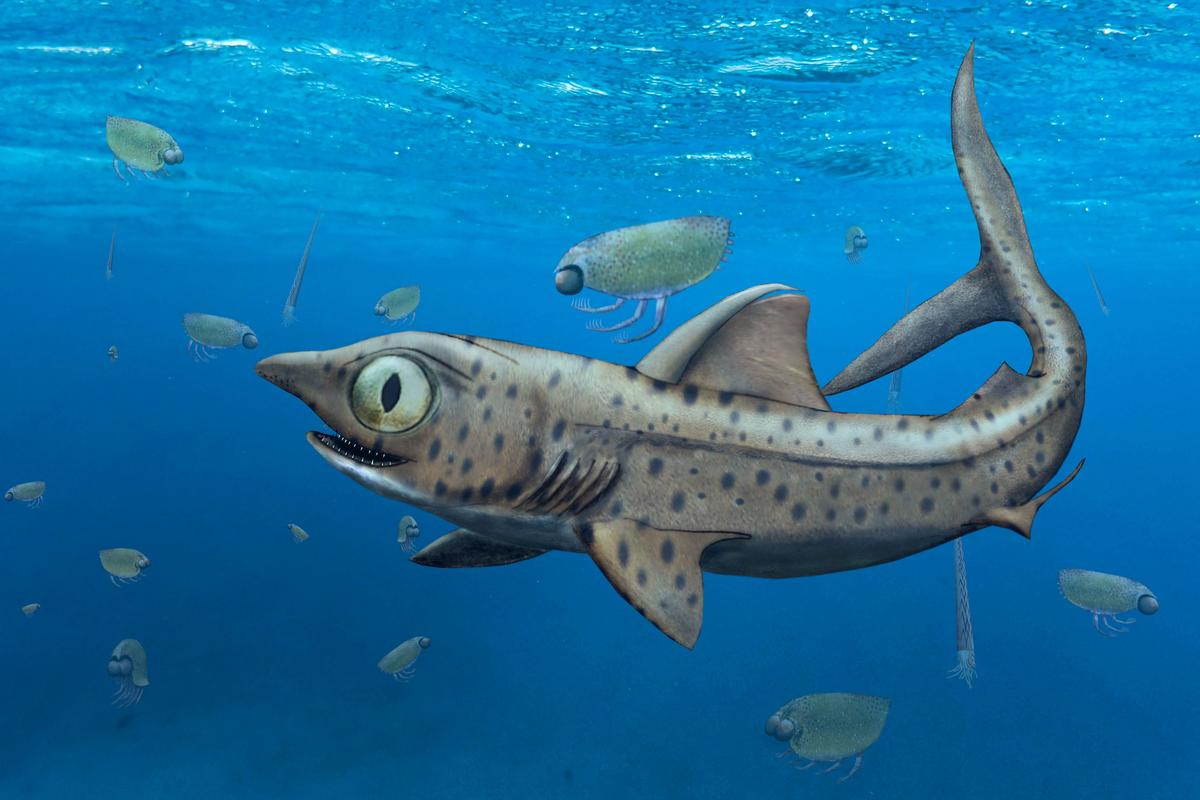 An illustration depicting what Ferromirum oukherbouchi may have looked like in life