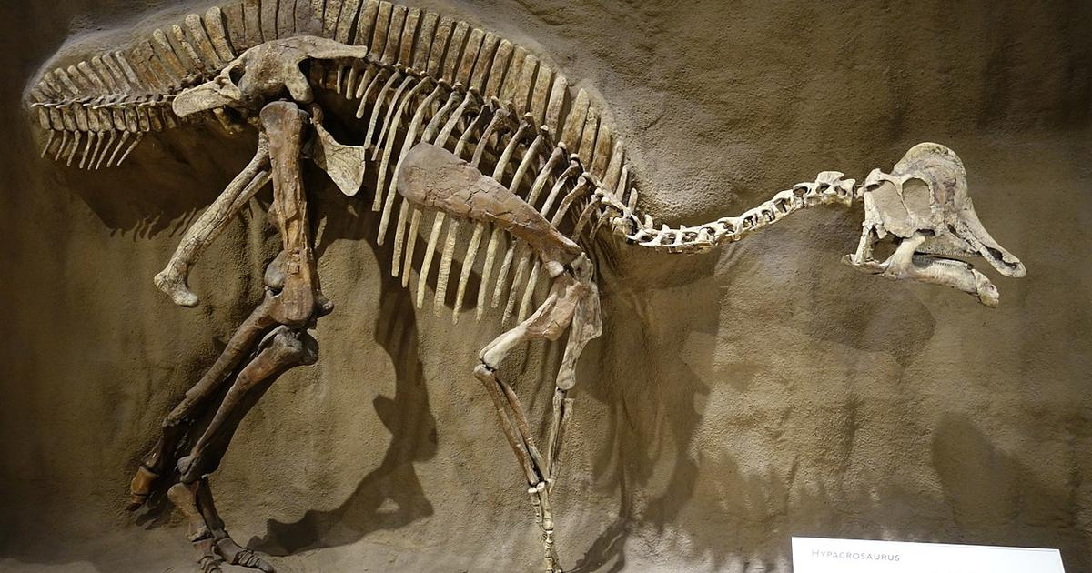 Dinosaur DNA and proteins found in fossils, paleontologists claim