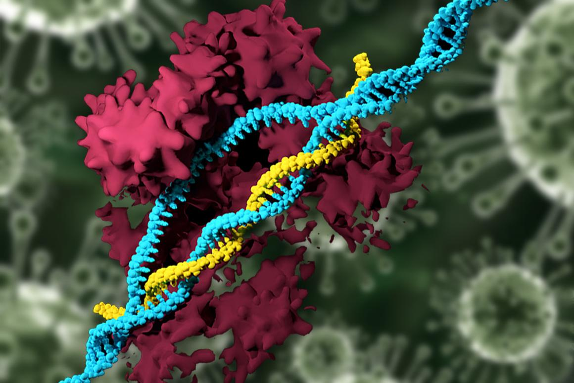 An MIT team has developed a new way to carry the CRISPR gene-editing tool, without using viruses