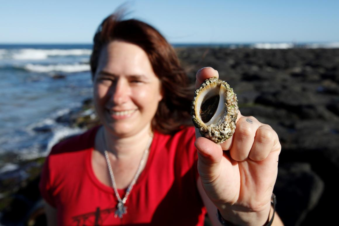 Professor Kirsten Benkendorff has conducted research into the secretions of an Australian sea snail with very promising resu