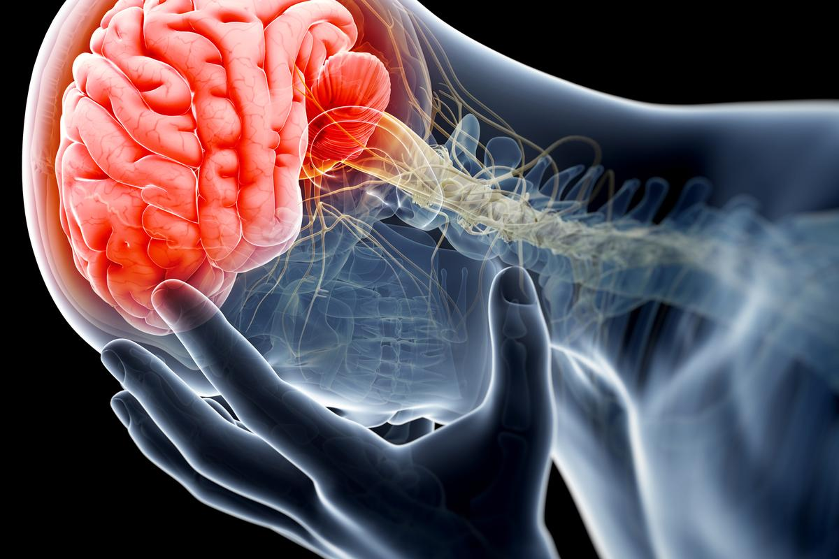 Scientists have identified the A3 receptor in the brain as a potential off-switch for chronic pain (Image: Shutterstock)