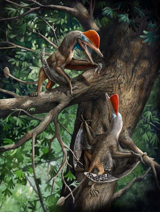 Artist's impression of Monkeydactyl, or Kunpengopterus antipollicatus