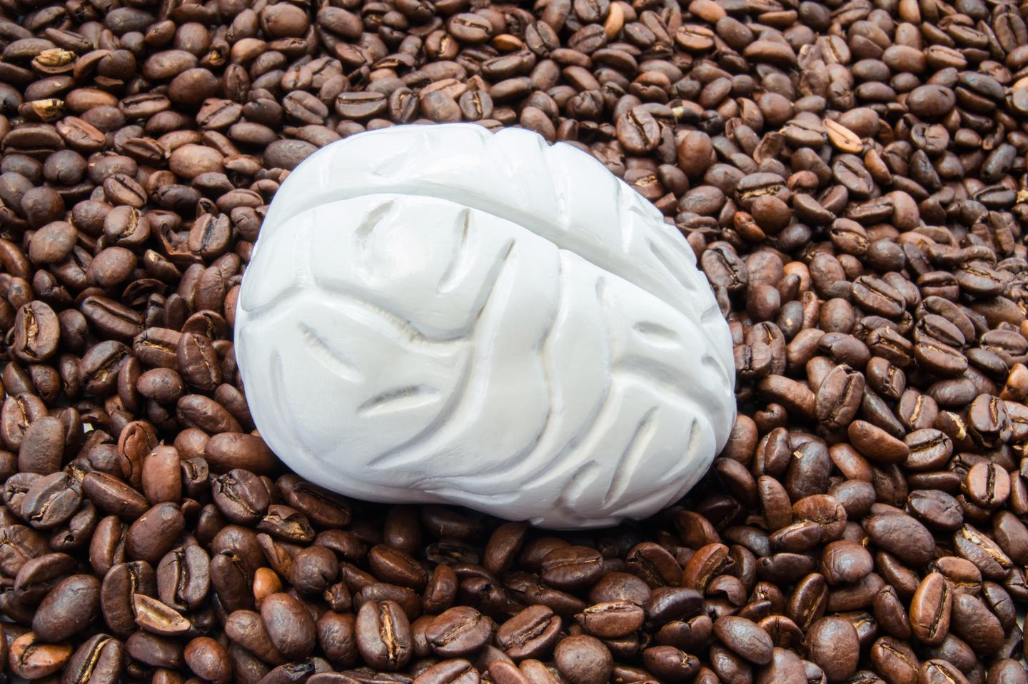 Research has found caffeine reduces the volume of gray matter in a brain but this effect is temporary and its influence on cognitive processes is unclear