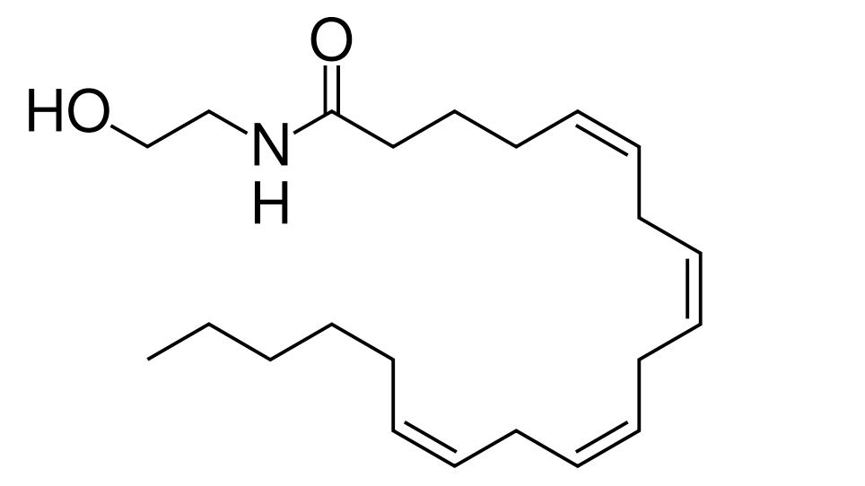 The molecular structure of Anandamide