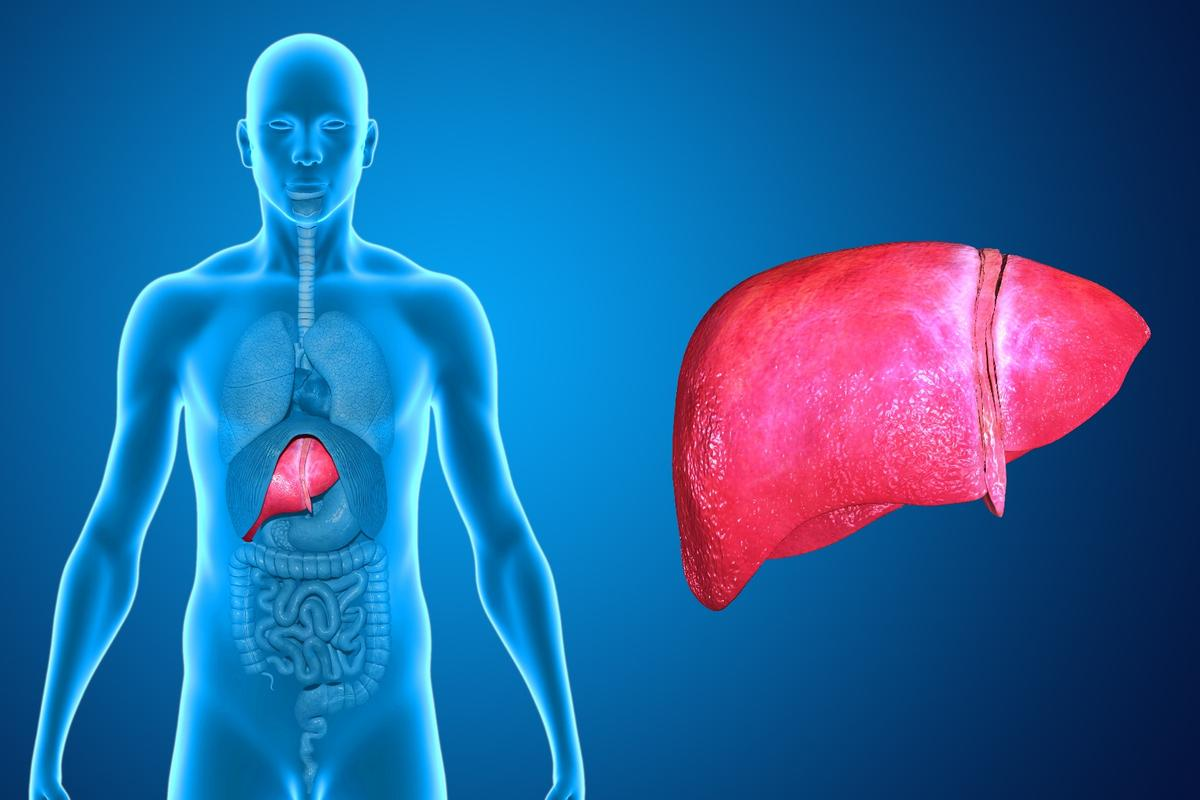 Fatty liver disease affects millions of Americans, but new treatment options may one day become available