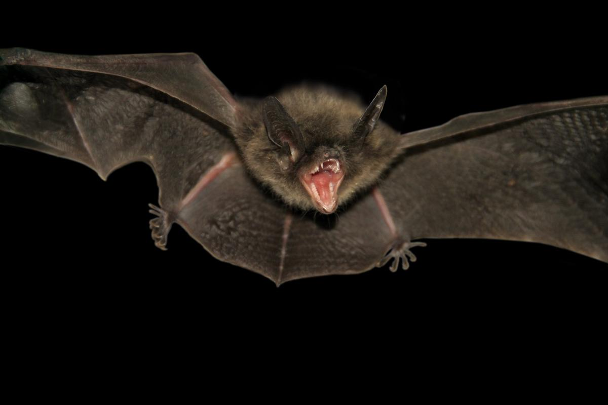 The ultrasonic squeaks of bats inspired a new radiation technique to inspect pipelines