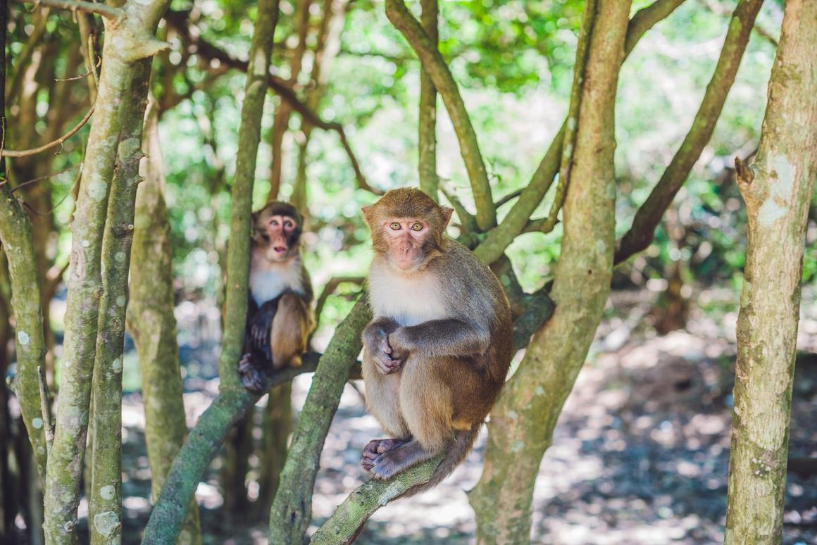 Chinese scientists test CRISPR on monkeys and find no off