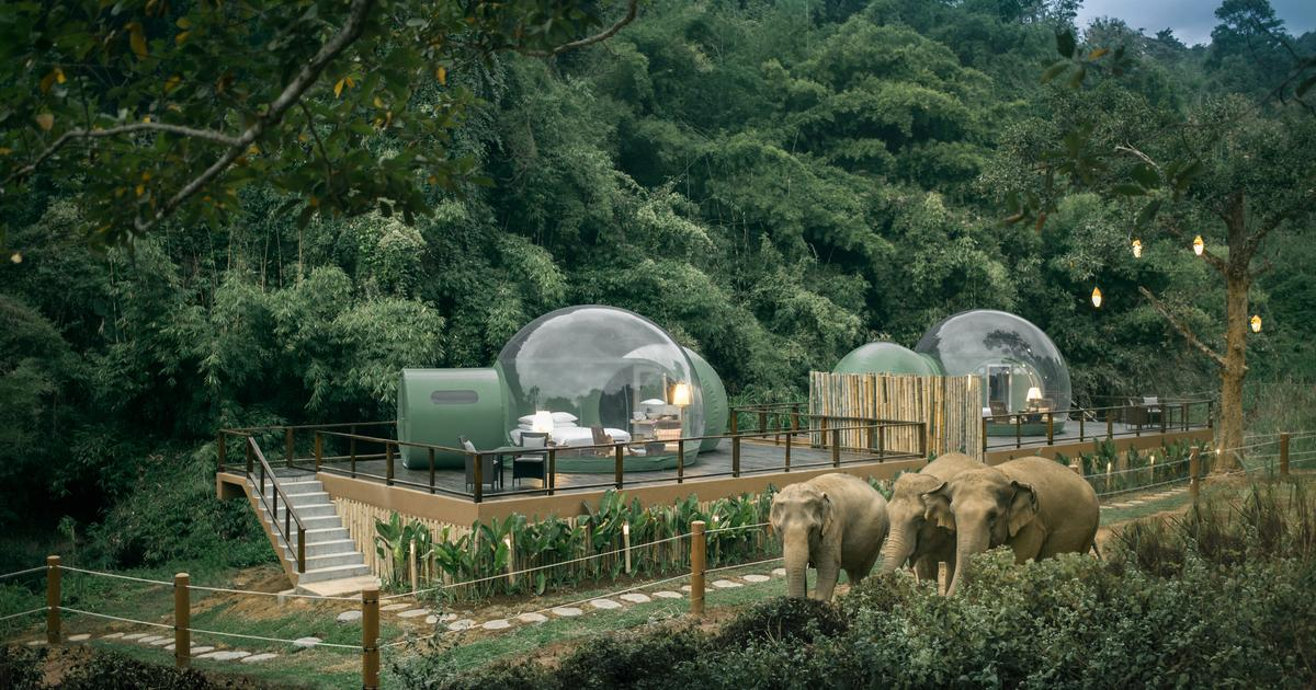 Transparent Jungle Bubbles let guests sleep among elephants