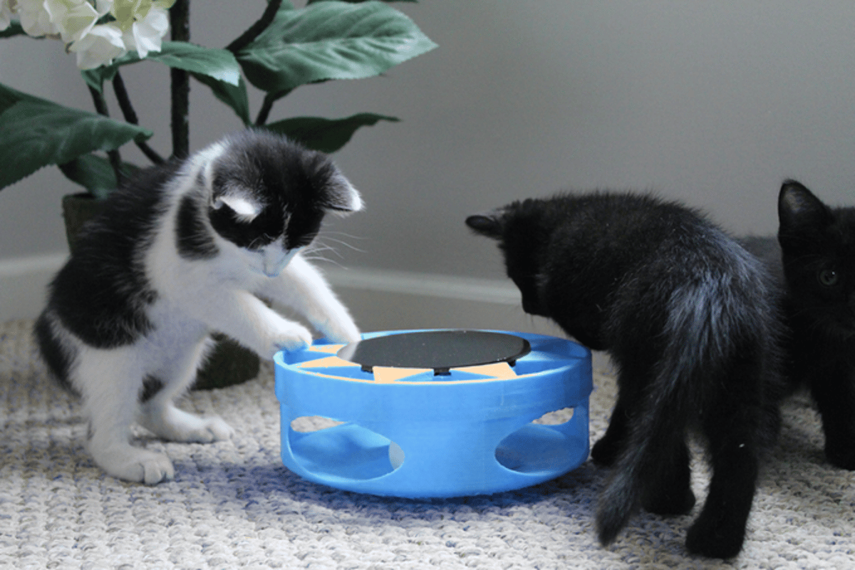 IrresistiCat keeps inquisitive cats in a playful mood by pushing a ball around an enclosed track