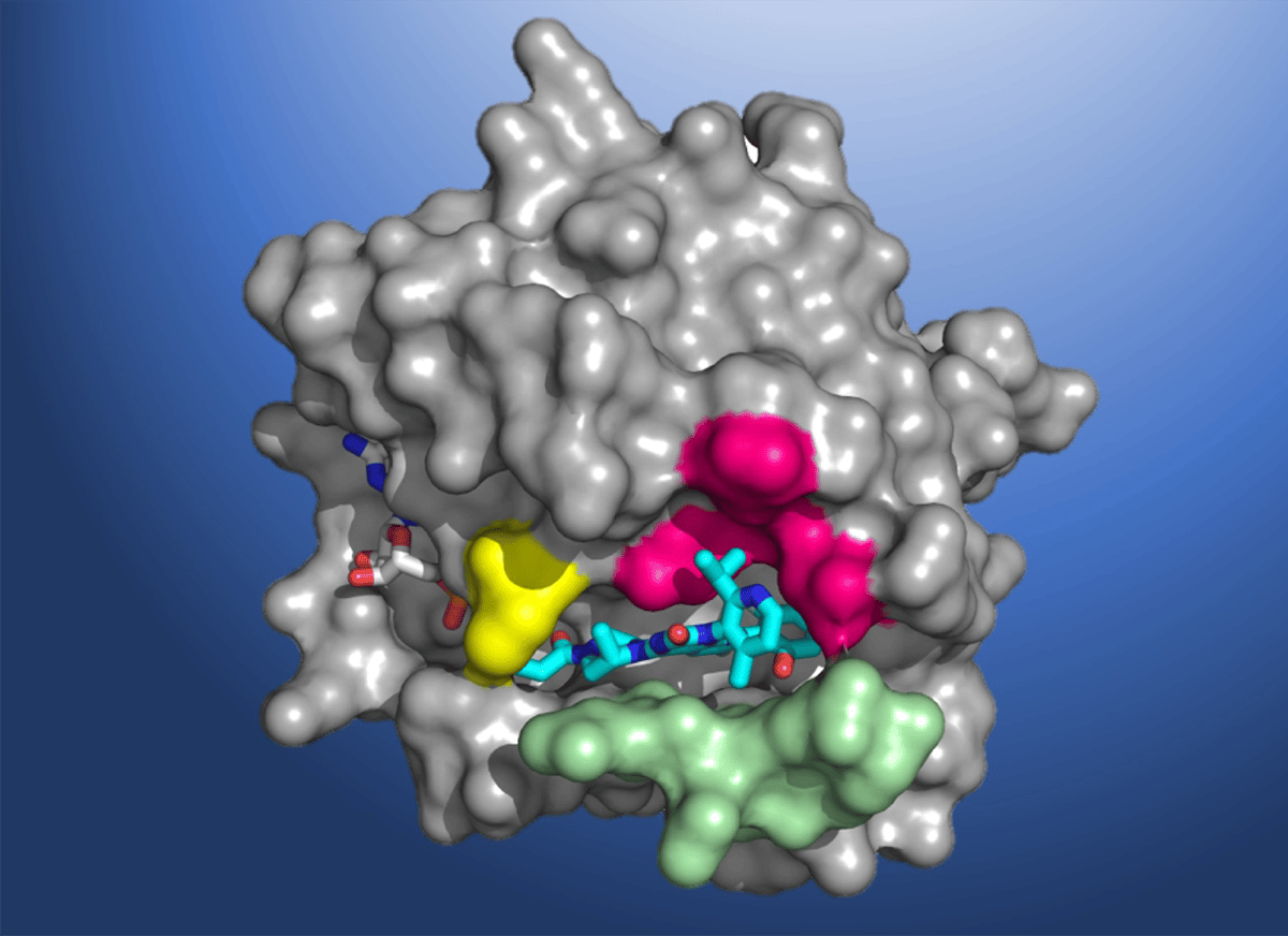 A structural map of the KRAS(G12C) protein, complete with the AMG 510 molecule bound to the pocket