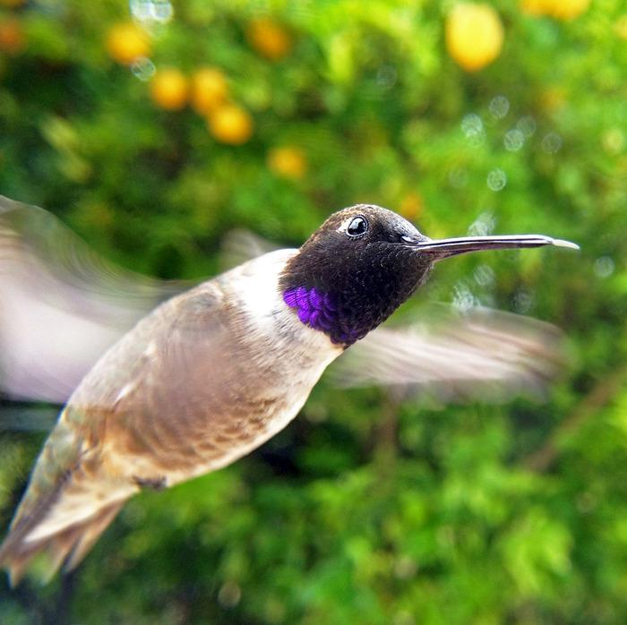 Bird Photo Booth allows amateurs to take close-up, professional-looking photos of birds