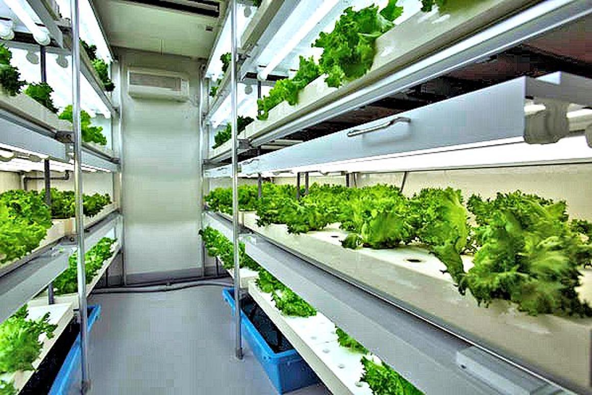 Bountiful harvest fills the trays of a Daiwa Agri-Cube prefab garden factory