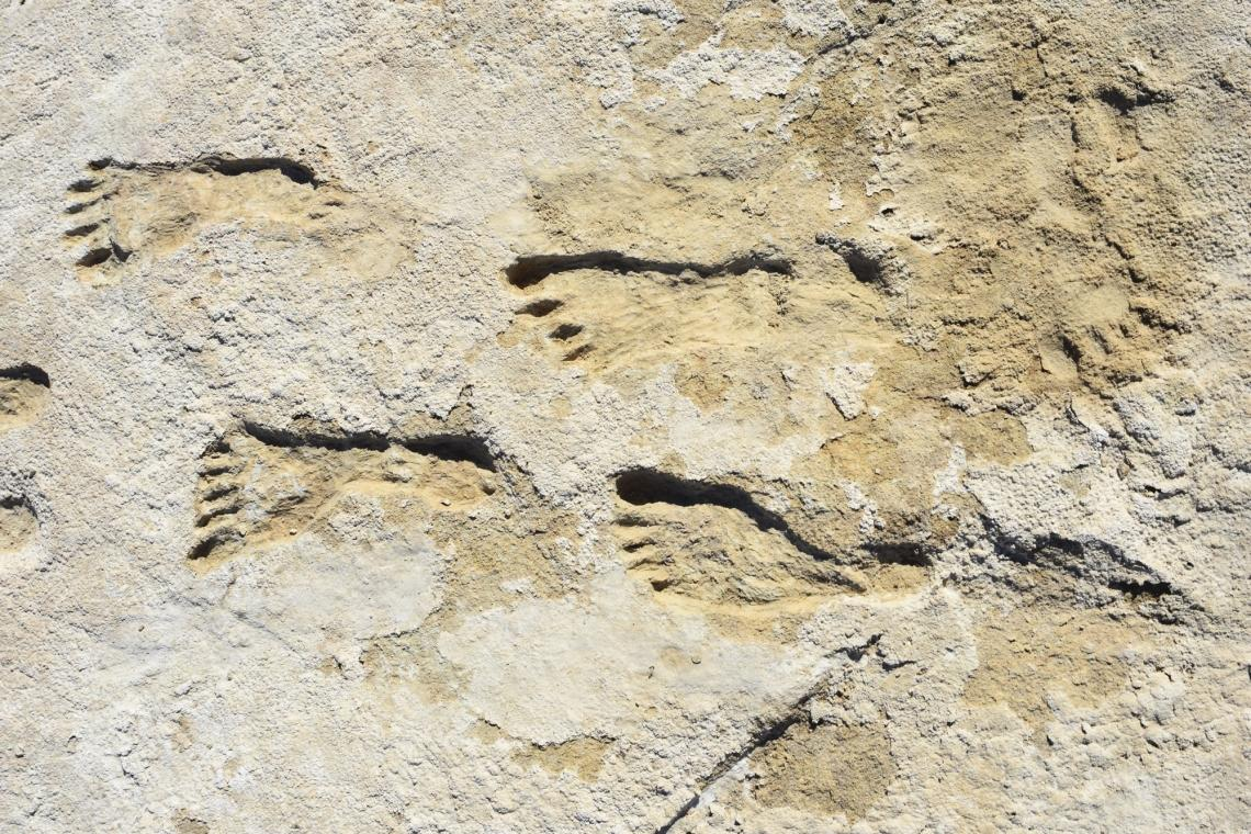 Archeologists have discovered fossilized human footprints that may represent the oldest unambiguous evidence of human settlement in North America