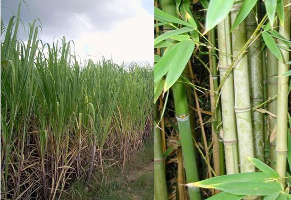 TreeFrog copier paper is made entirely from sugar cane waste and salvaged bamboo (Photos: Friviere, annieo76)