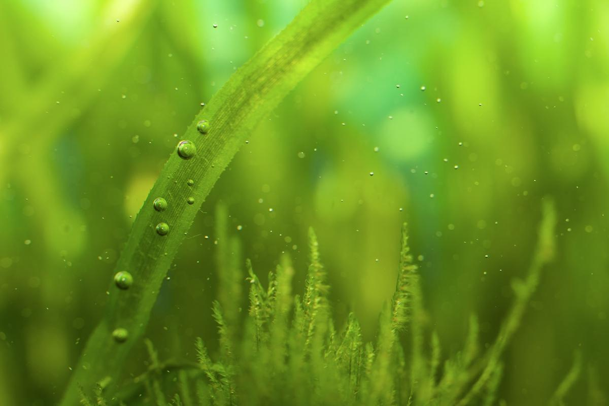 In order to become a viable fuel source one day, algae needs to come out of the lab and be grown in real-world conditions