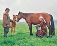 Mare milking in present-day Kirghizstan. Here, the foal is present to initiate the milk let down.Photo by Nicolas Lescureux