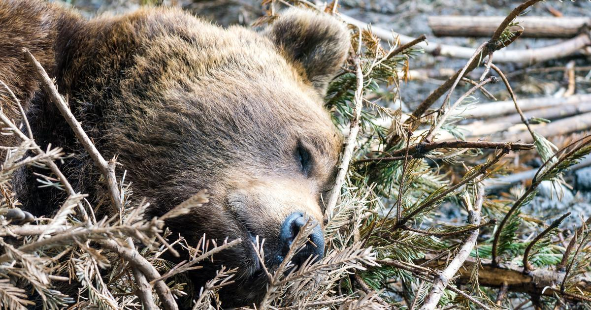 """Cancer cells hibernate like """"bears in winter"""" to survive chemotherapy"""