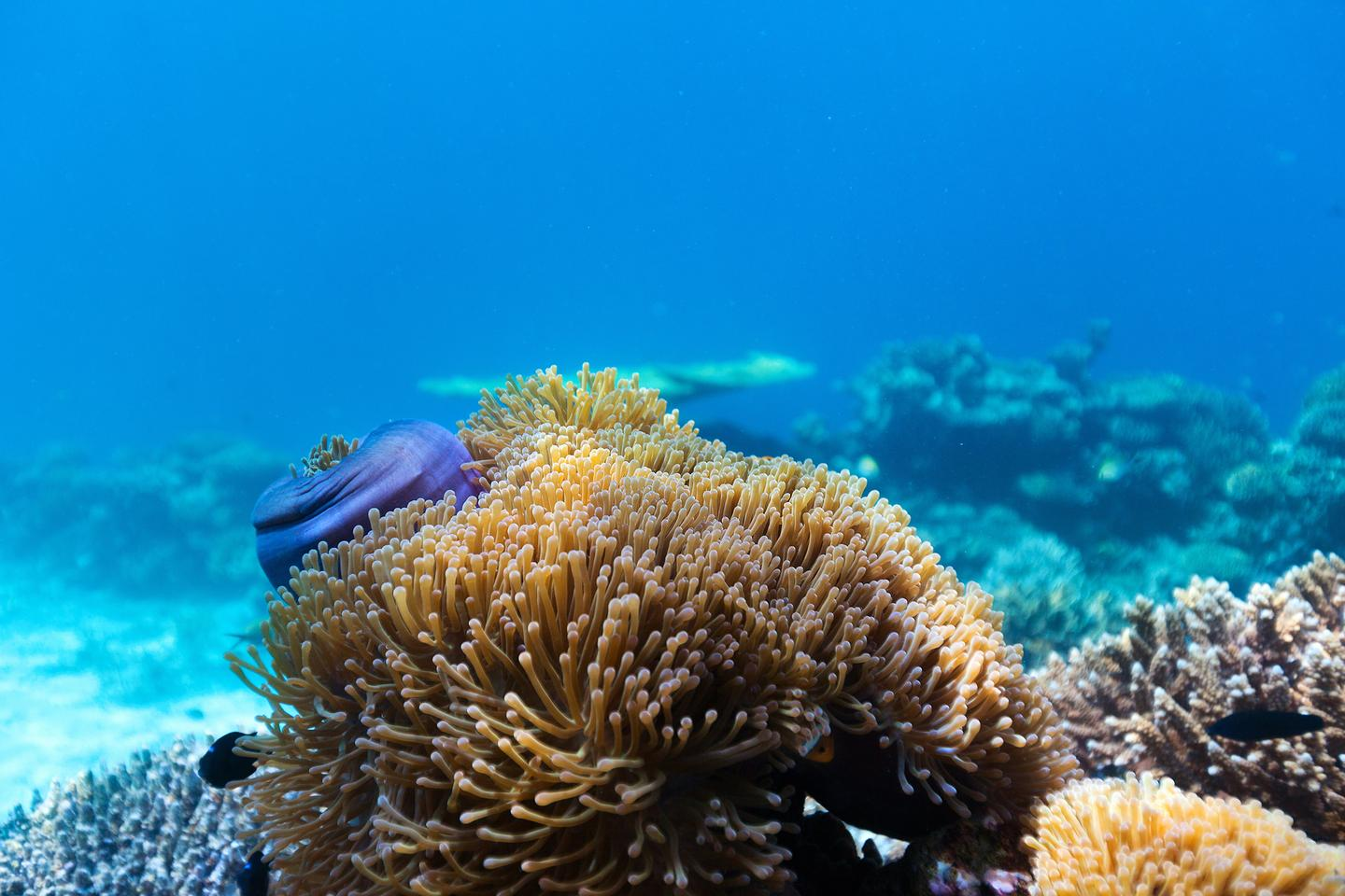 Coral rely on a symbiotic relationship with algae for sustenance and color