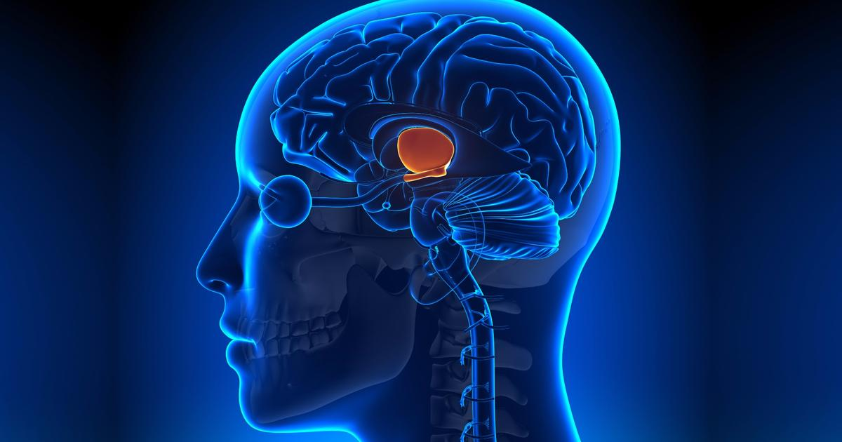 The fountain of youth might reside deep in our brains