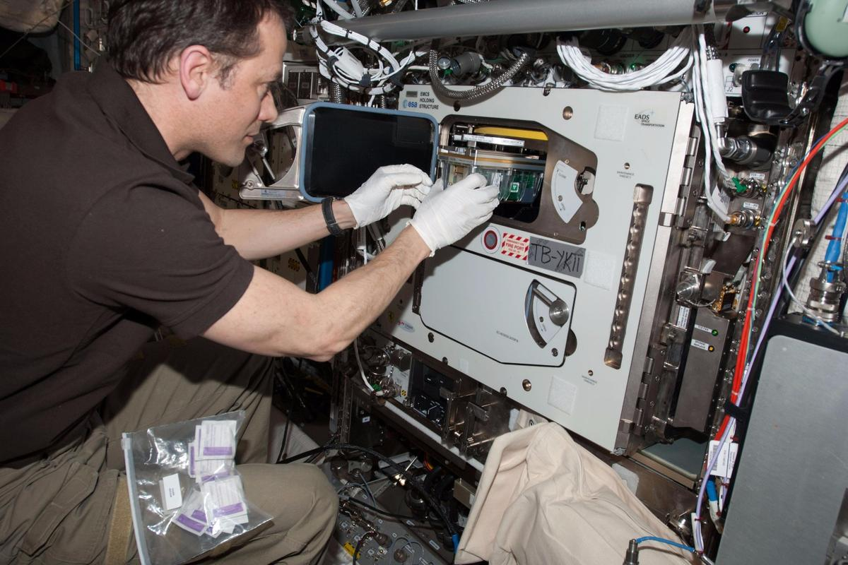 An ESA experiment aboard the International Space Station has looked at how seedlings grow in microgravity