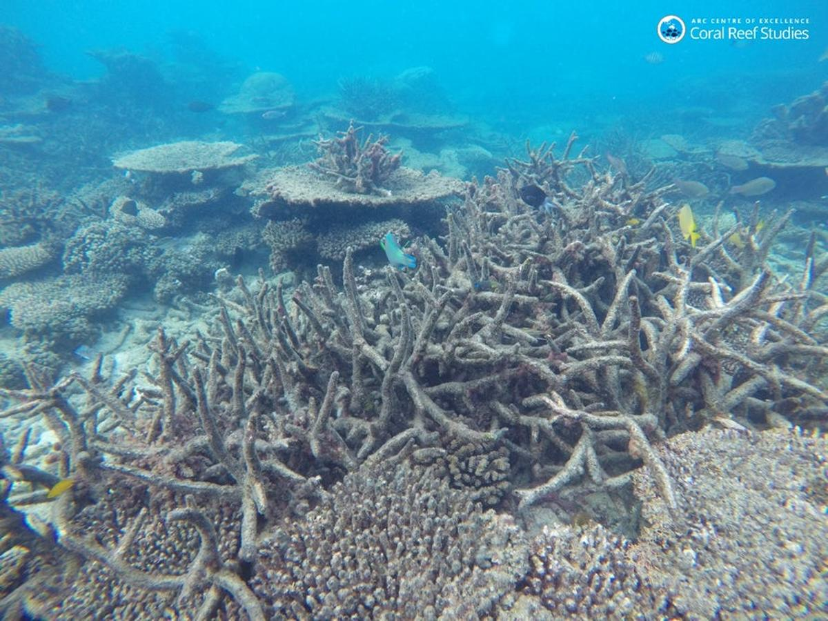 """A new study has found that the Great Barrier Reef has persisted through five major""""death events"""" in the past – but the current problems could be happening too fast for the coral to keep up"""