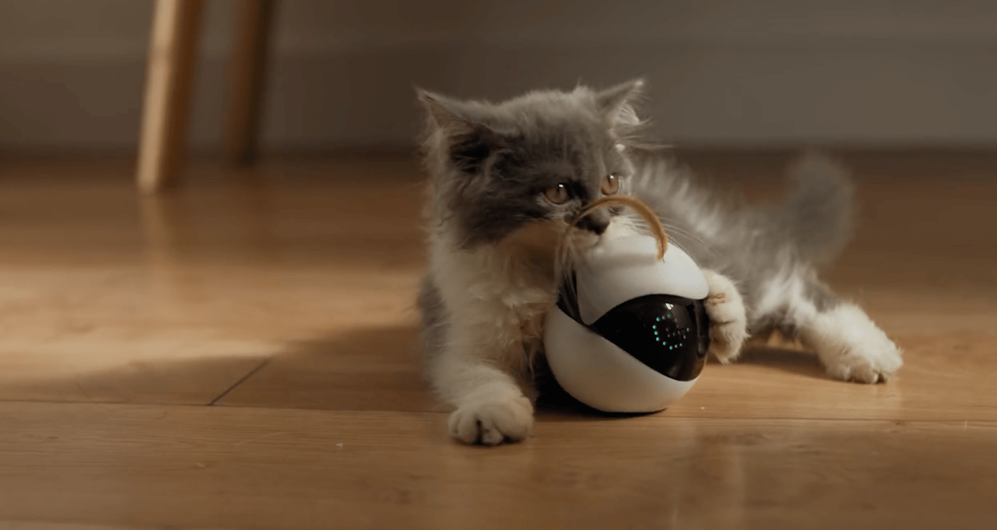 Ebo is a robot companion for cats