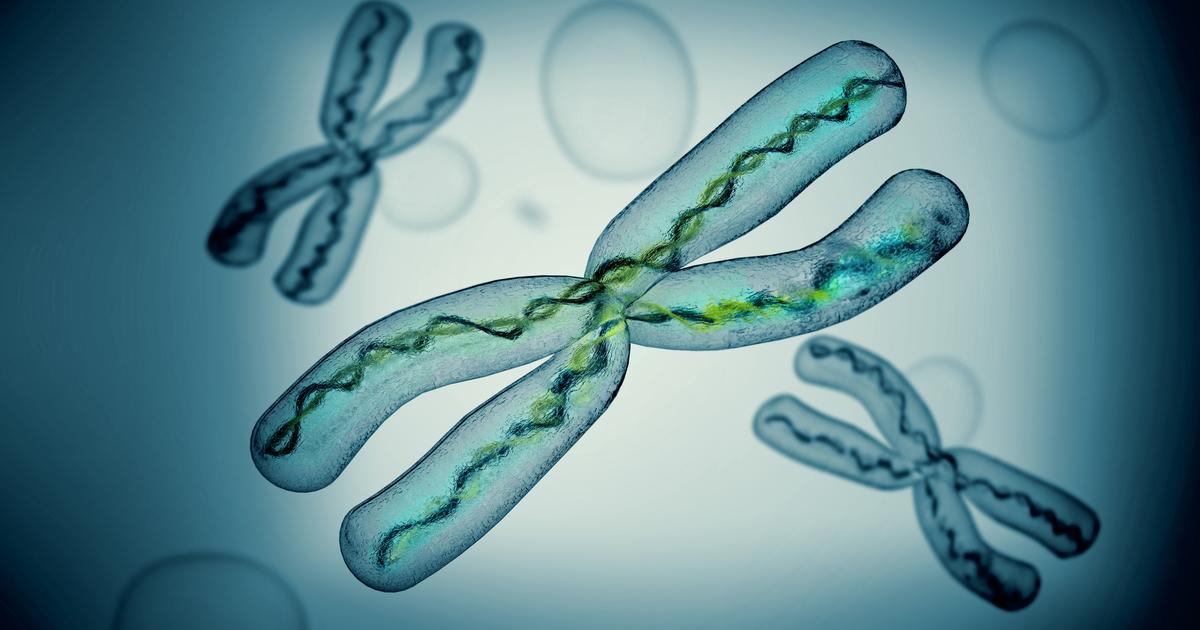 Human X chromosome completely sequenced for the first time