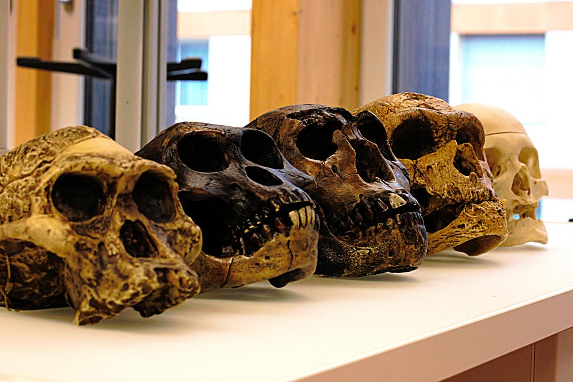 New research suggests humans and Neanderthals split off from their last common ancestor earlier than we previously thought
