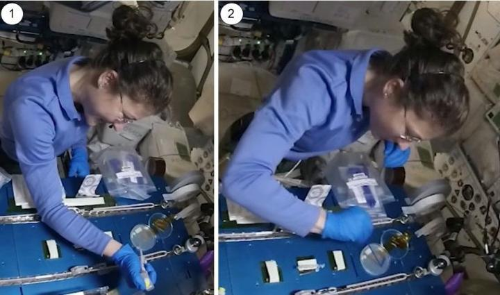Astronaut Christina Kock performs CRISPR editing on yeast colonies onboard the International Space Station