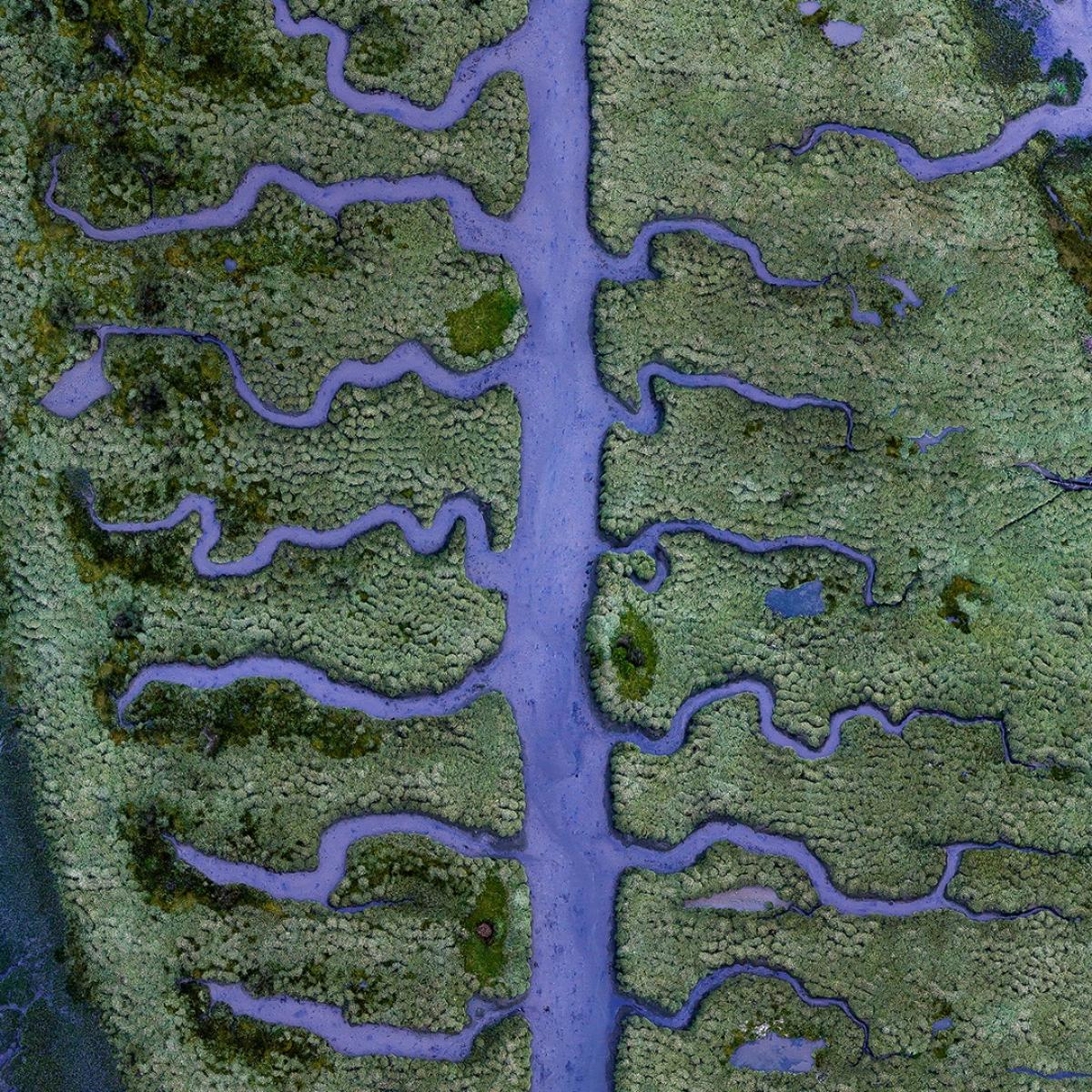 Low tide at blue hour reveals a muddy riverbed of fishbone shaped streams in the middle of a small, but unique part of the salt marsh located at the end of the Betanzos Estuary, near Coruna in northern Spain