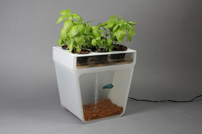 The Home Aquaponics Kit from Back To The Roots is a self-cleaning fish tank which uses waste water to feed the herb garden on top