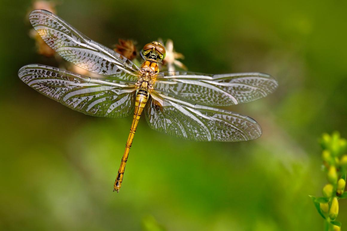 A new imaging technique has revealed how dragonfly wings get their antibacterial properties