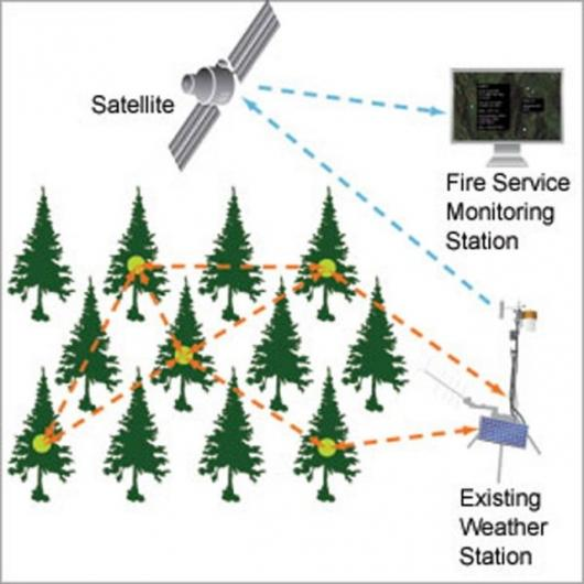 Tree-powered wireless sensor networkGraphic / Rebecca Macri via MIT