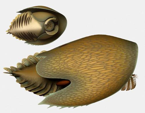 Utilizing spine-covered claws that looked like forward-facing rakes,Cambroraster falcatus likely sifted through sediment on the ocean floor, filtering out small organisms which were then passed up to its circular tooth-lined mouth