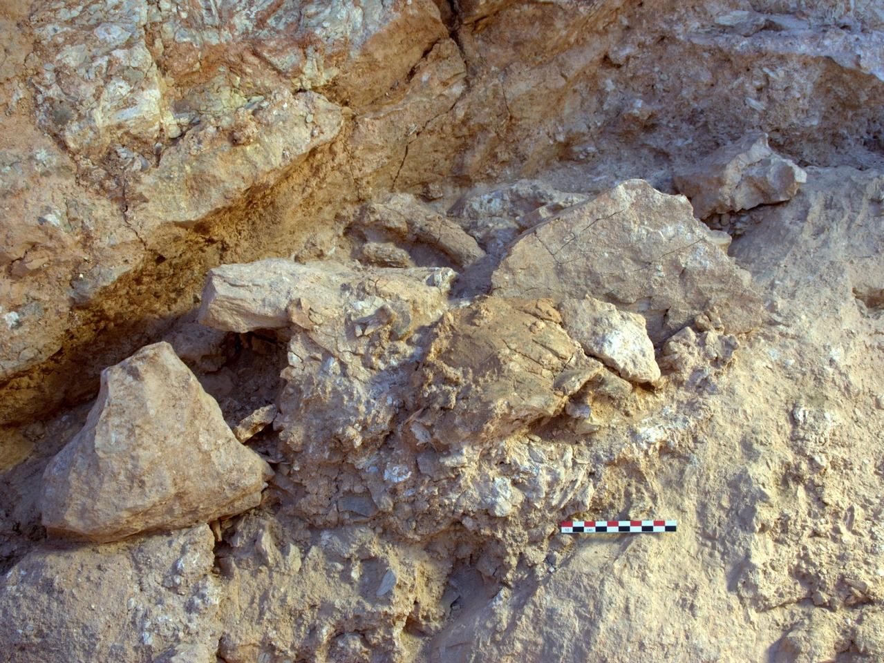 Two of the new Jebel Irhoud (Morocco) fossils in situ as they were discovered during excavation
