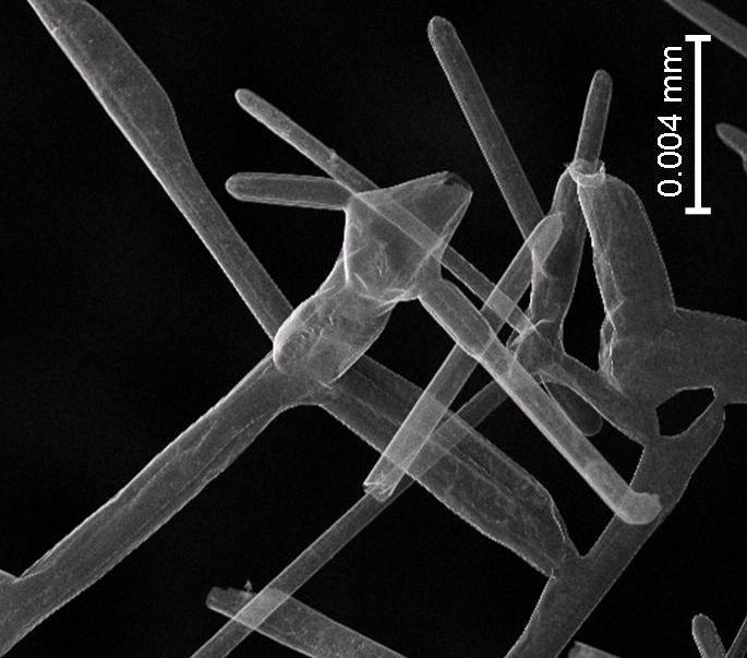 A microscope image of aerographite, which is now officially the world's lightest solid material (Image: Technical University of Hamburg)