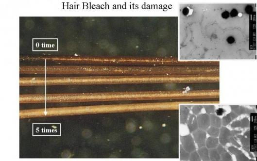 Showing effects of damage to hair by regular bleach.