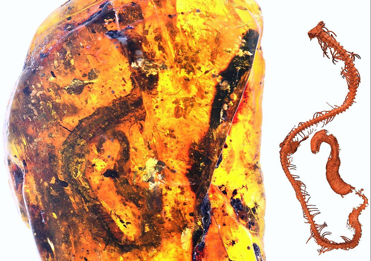 The amber fragment containing the baby snake, and 3D digital reconstruction of its skeleton