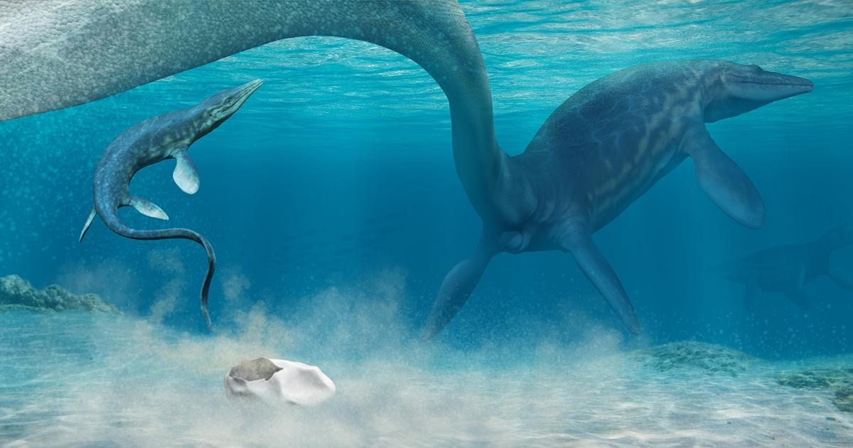 Giant ancient egg found in Antarctica could be first from a mosasaur
