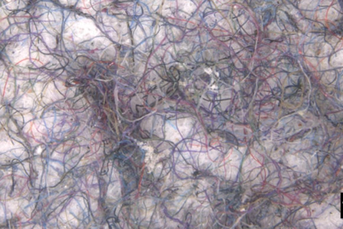 Microfibers filtered from the test washing loads
