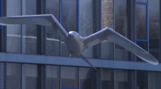 Festo's SmartBird robotic seagull