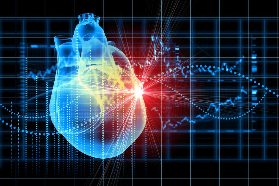 A protein patch has been shown to regenerate heart tissue in animals (Credit: Shutterstock)