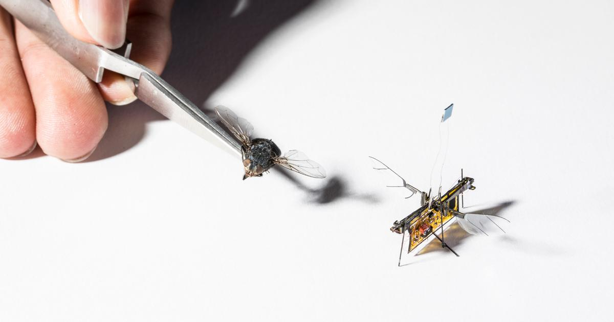RoboFly is first flying-insect micro-robot to go tetherless