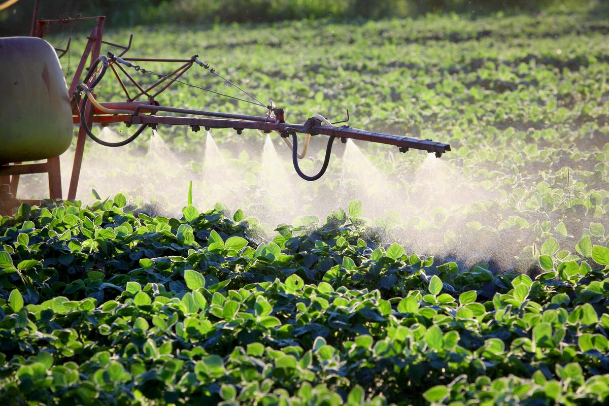 A new study is the first to detect the pesticide chlorpyrifos inhibiting metabolic processes in brown fat cells