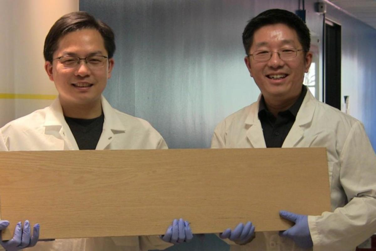 "A new densification process can make ""super wood"" that's 12 times stronger than natural wood"
