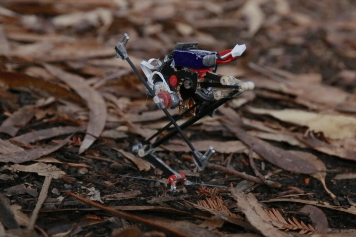 The SALTOrobot can jump up to 1 meter