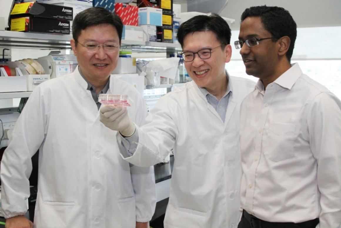 Researchers in Singapore have developed a wayto use patients'stem cells to see whether acancerdrug is safe for them